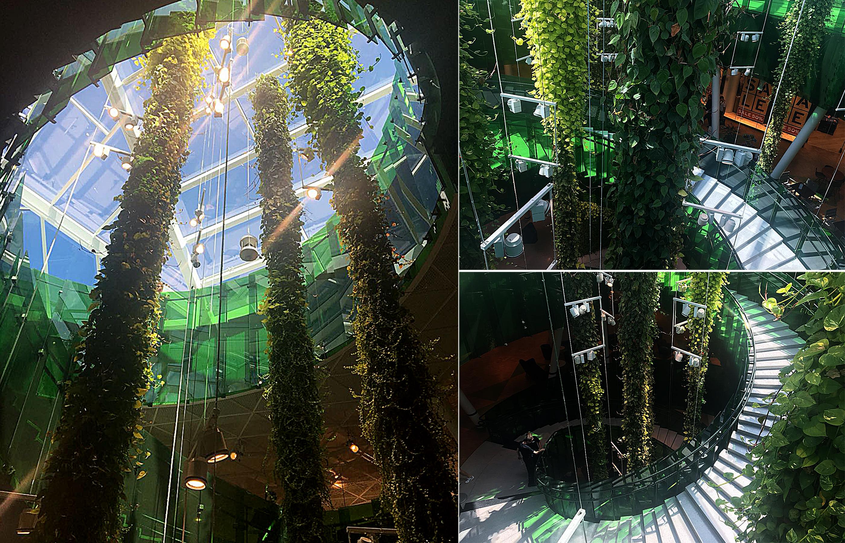 Для оформления холла использованы живые растения