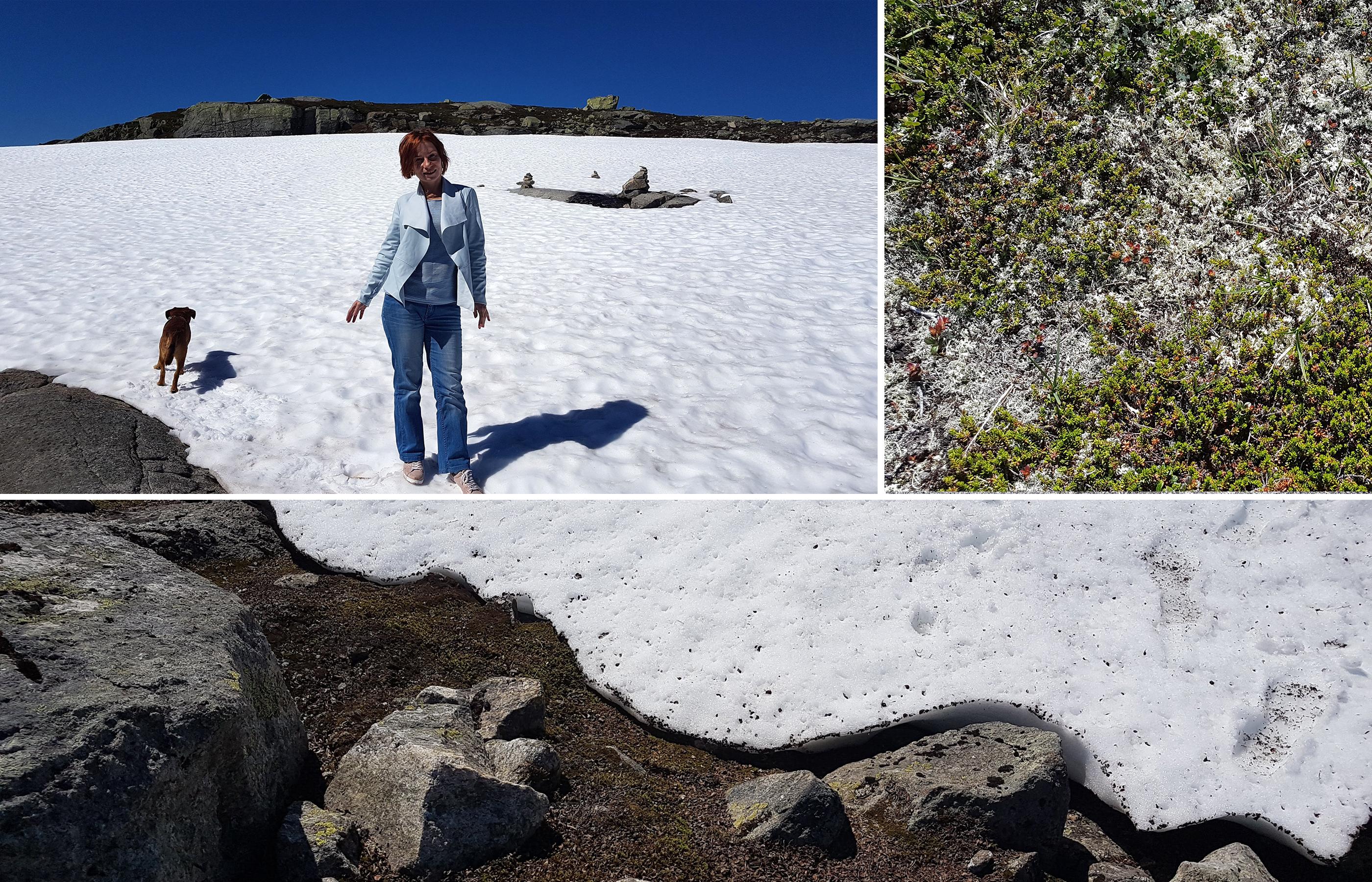 Норвежское высокогорье - снег, мхи и лишайники, скалы и чистейшие озера